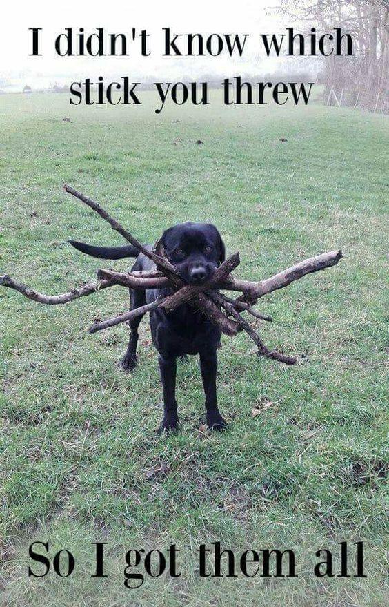 All sticks