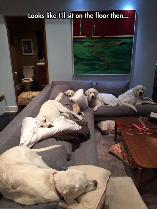 No dogs on the furniture